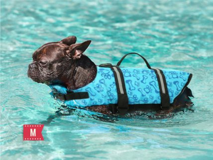 Pet Life Jacket - Blue-  M