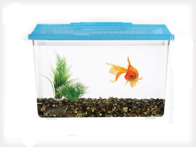 Plastic fish aquarium pet tank crazy sales we have for Fish tank deals