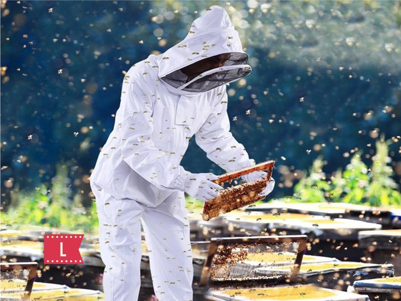 BeeKeeping Clothing Bee Suit with Veil Hood - L