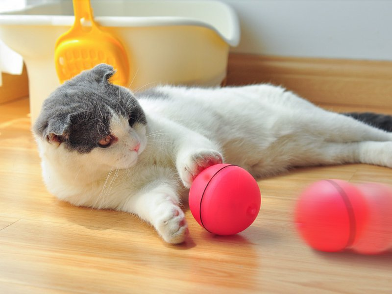 Cat Toy LED Ball - RED