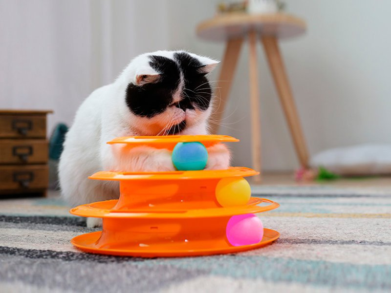 Cat Toy Tower Ball Track